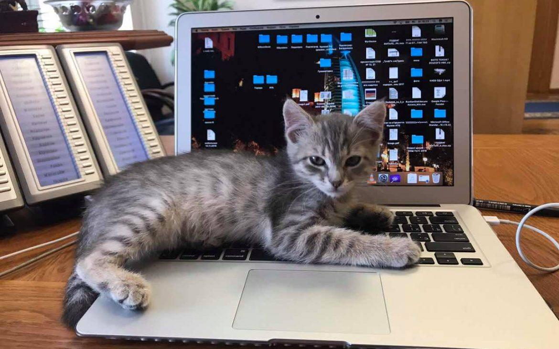 В Днепровской ОГА работает кот тигр