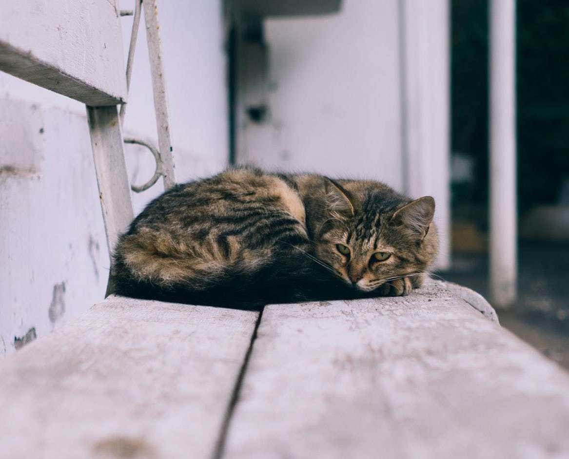 В столице ищут волонтеров, которые будут гладить котиков