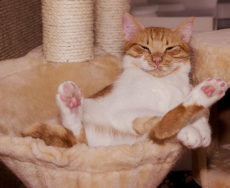 Рыжий кот лежит в кресле, отдыхает