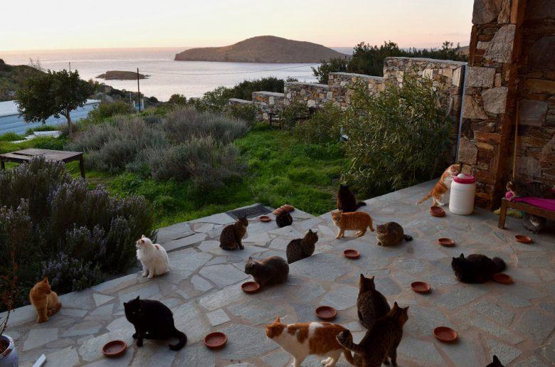 в Греции ищут человека для ухода за котами