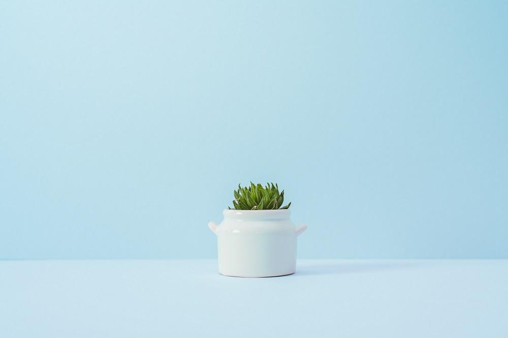 Зеленый росток в горшочке на фоне белой стены
