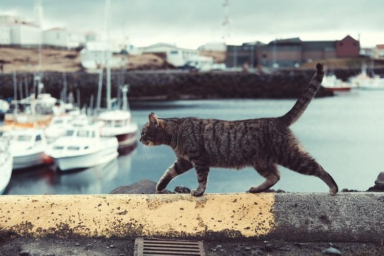 Киевский рыбоохранный патруль принял в свои ряды кота