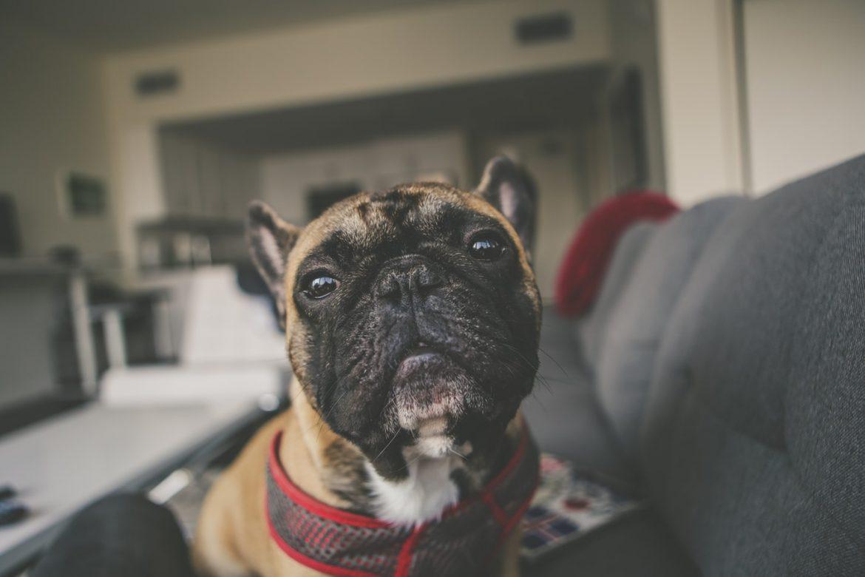 Акция - Возьми собаку на работу